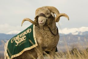 10 Ways To Kick Butt in Your Freshman Year at Colorado State