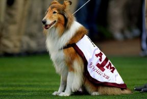 10 Ways To Kick Butt in Your Freshman Year at Texas A&M University