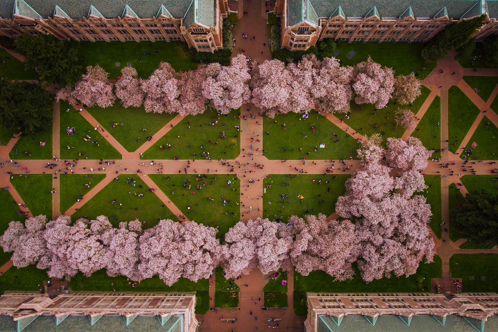 University of washington 1