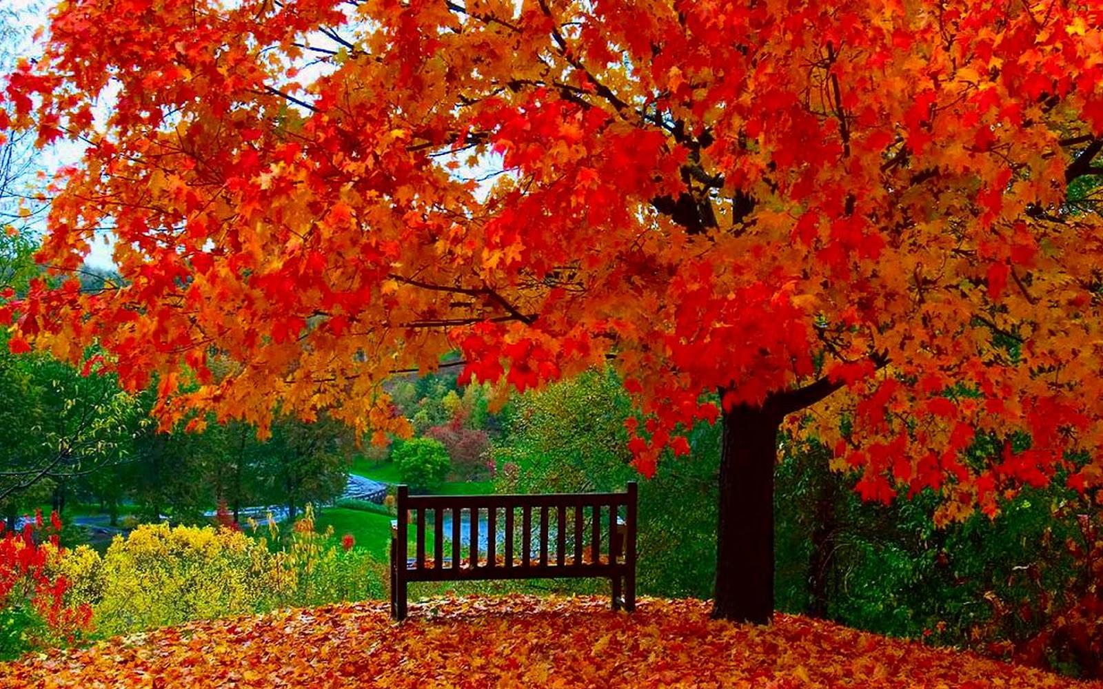 Autumn 252353