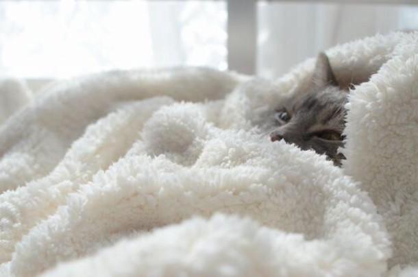 a cat in a blanket