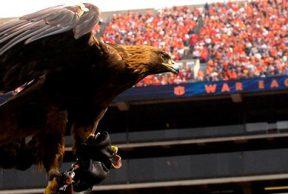 5 Reasons to Attend Auburn Unversity