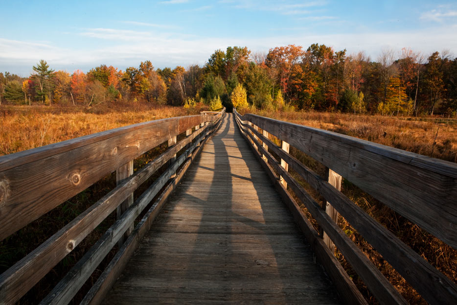 picture of long walkway down a nature trail