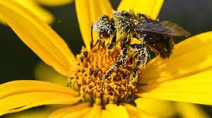 How to Survive Pollen Season in Charleston