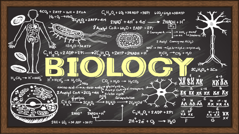 biology-101-syllabus-resource-lesson-plans_139158_large