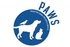 5 Reasons Why You Should Volunteer for PAWS at University of Kentucky