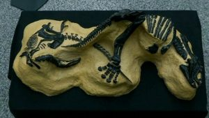 This is a picture of dinosaur bones.