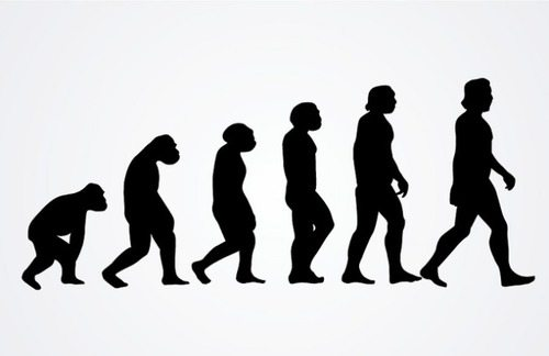 The evolution from ape to man