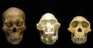 An image of human evolution