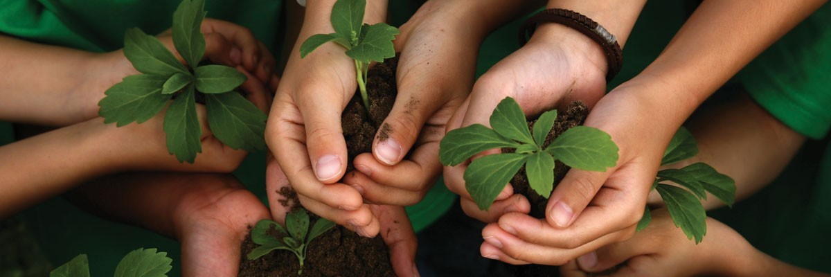 Hands holding plants