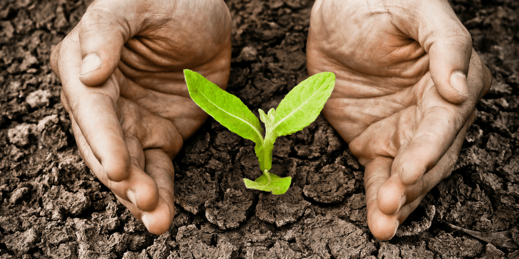 Human hands tending to a plant