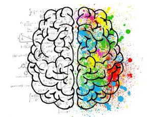 Psychology of the two parts of the human brain.