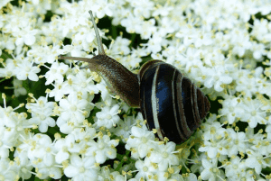Looking at the life of a snail.