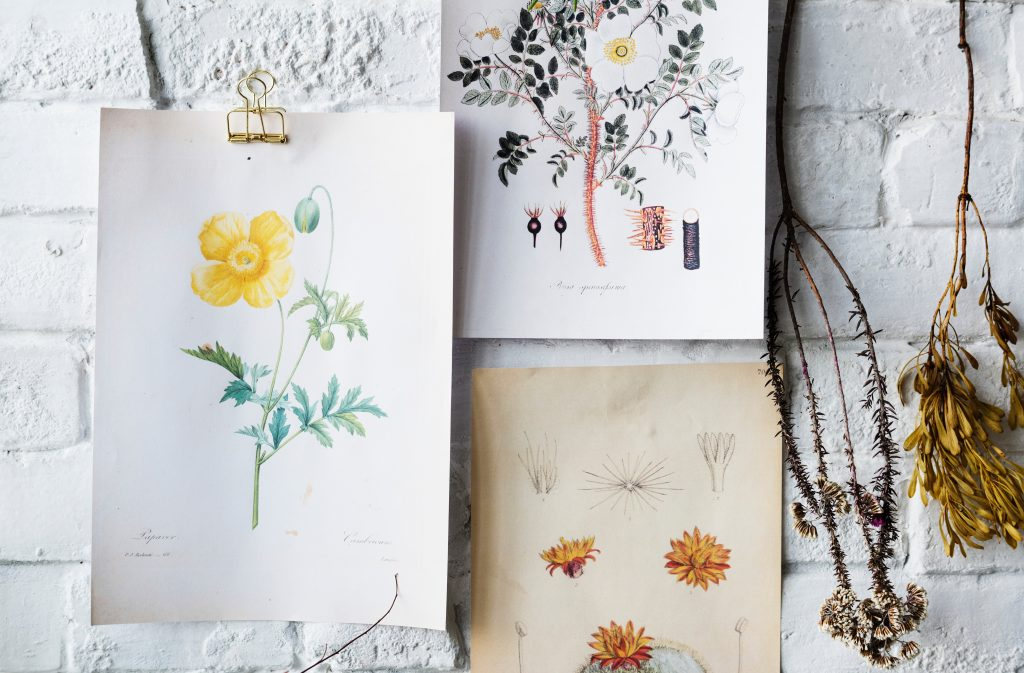 Flowers drawn and painted paper on a white brick wall, via RawPixel on Unsplash