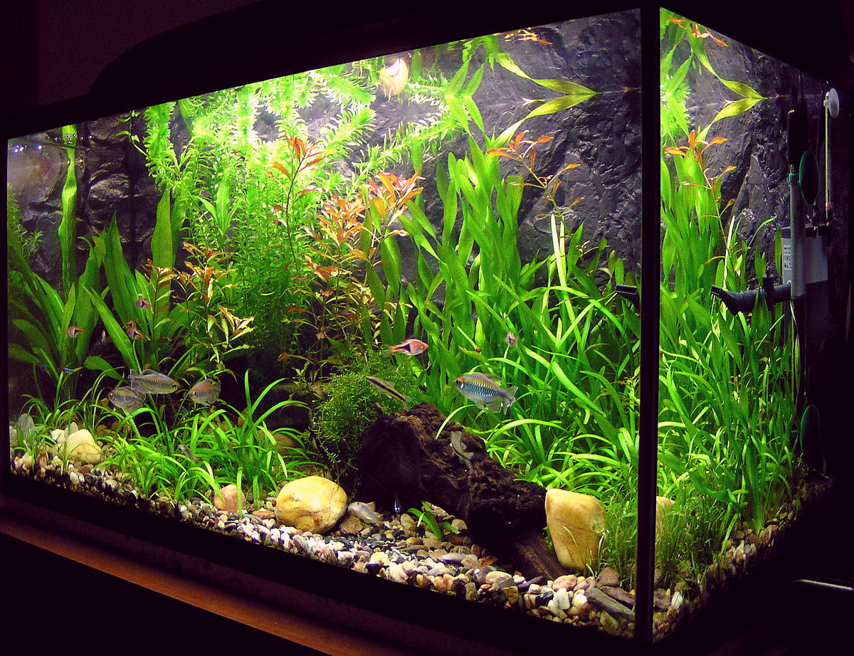 This aquarium is one that is developed by one who may have taken this course.