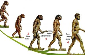 The evolution of the human body.