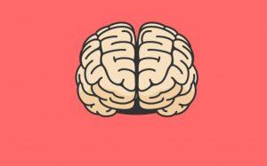 A clip-art image of a brain.