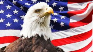 A bald eagle in front of a flag.