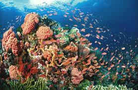 Photograph of the corals and fishes living around it