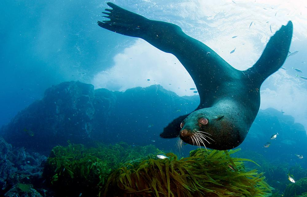 This image is of a seal--one of the many animals found in the ocean.