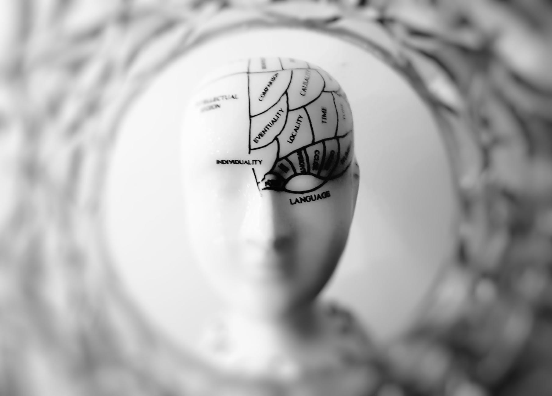 A sculpture diagramming the human brain