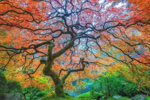 The artistry of a tree in nature.