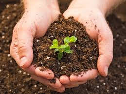 an image of a person holding soil