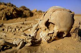 This is an image of a skull dug up from a site.