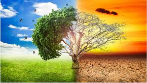 Tree graphic showing healthy climate vs. climate change