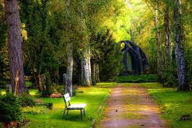 Forest path with bench and trees
