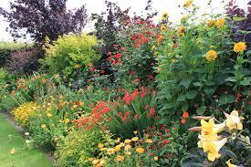 A flower garden.