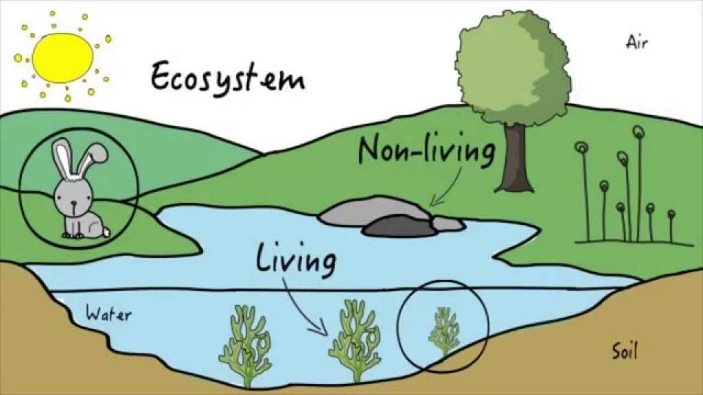 A representation of an ecosystems.