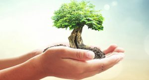 The image shows a hand holding a growing tree, to translate that us as humans contribute to how our earth grows and stays clean.