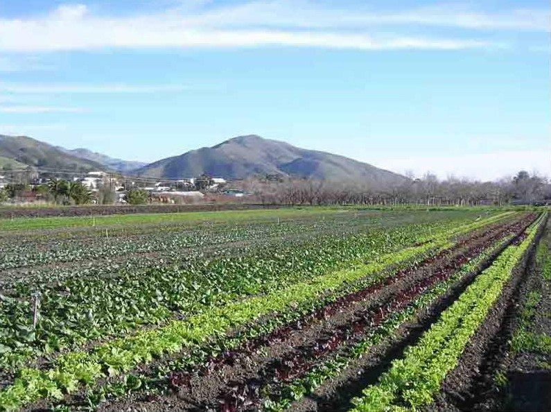 The Cal Poly Organic Farm is a huge 9-acre production unit