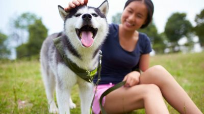 Woman playing with a husky