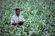 Man studying agriculture.