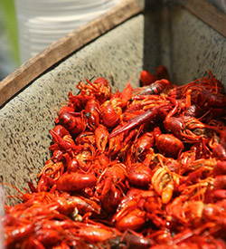 A bunch of crawfish!
