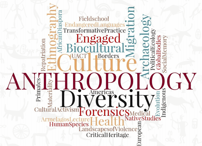 The major study areas in Anthropology in a wordcloud