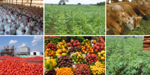 Different kinds of agricultural products