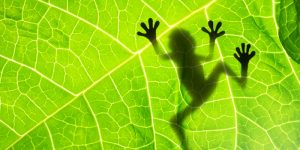 The leaf of a particular plant with a shadow of frog