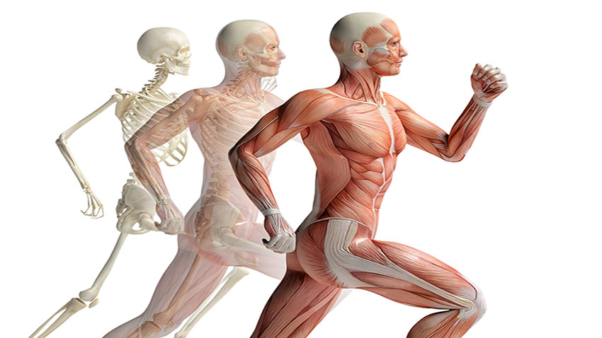 a picture of the movement of the human body