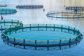 This image begins to demonstrate the Aquaculture industry.