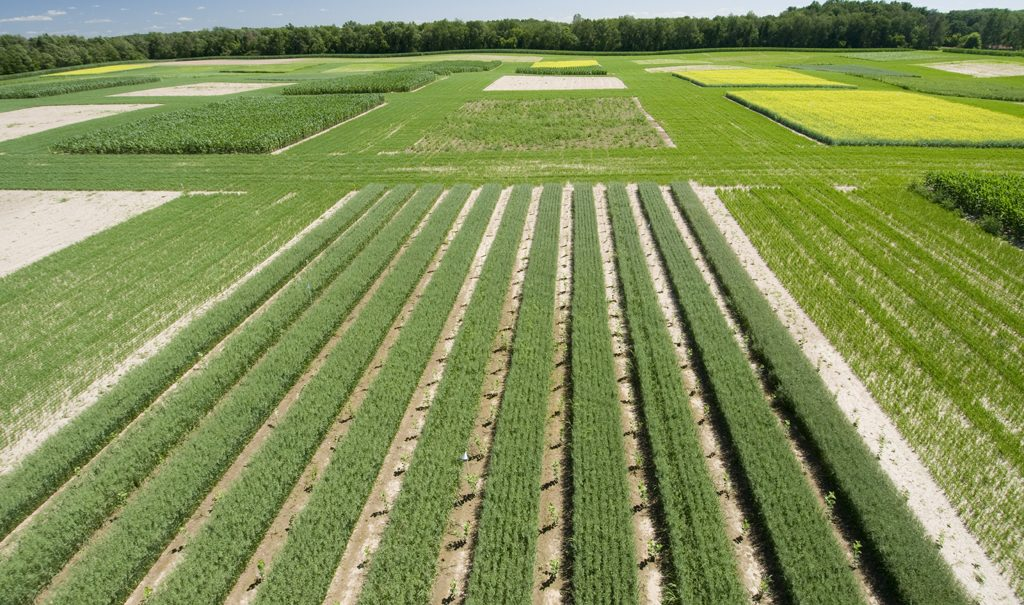 Image of field of plants and crops grown.