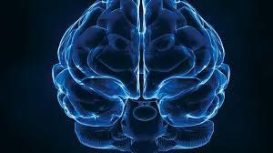 A digital image of the human brain