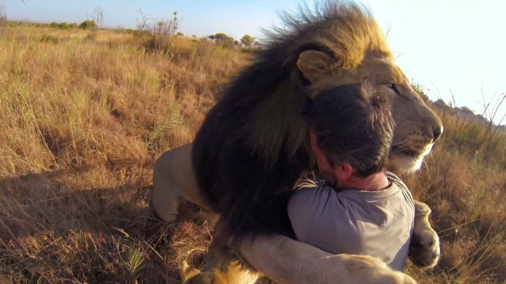 University of New England Student Taming and Hugging a Lion