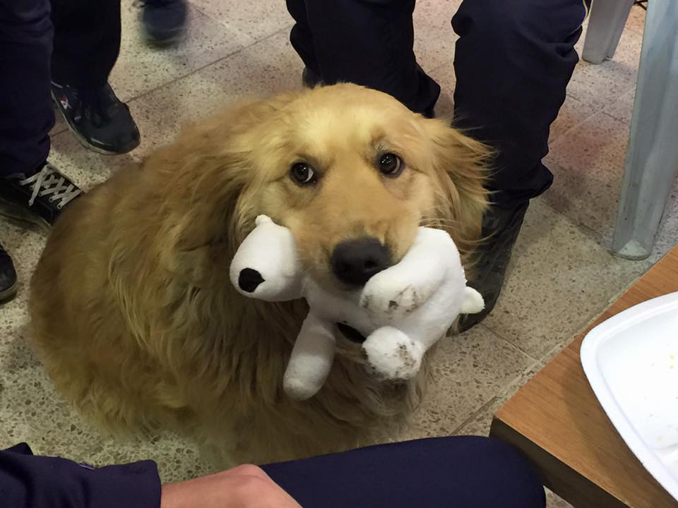 Cute therapy dog.