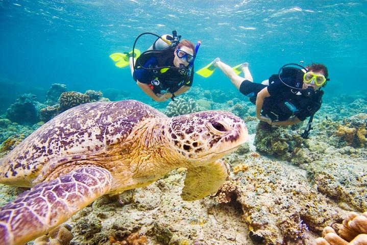 Scuba divers and a sea turtle