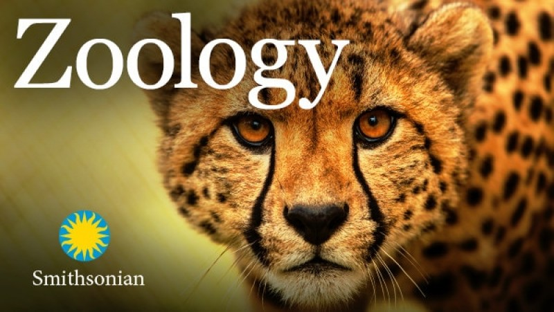 This is a picture of zoology