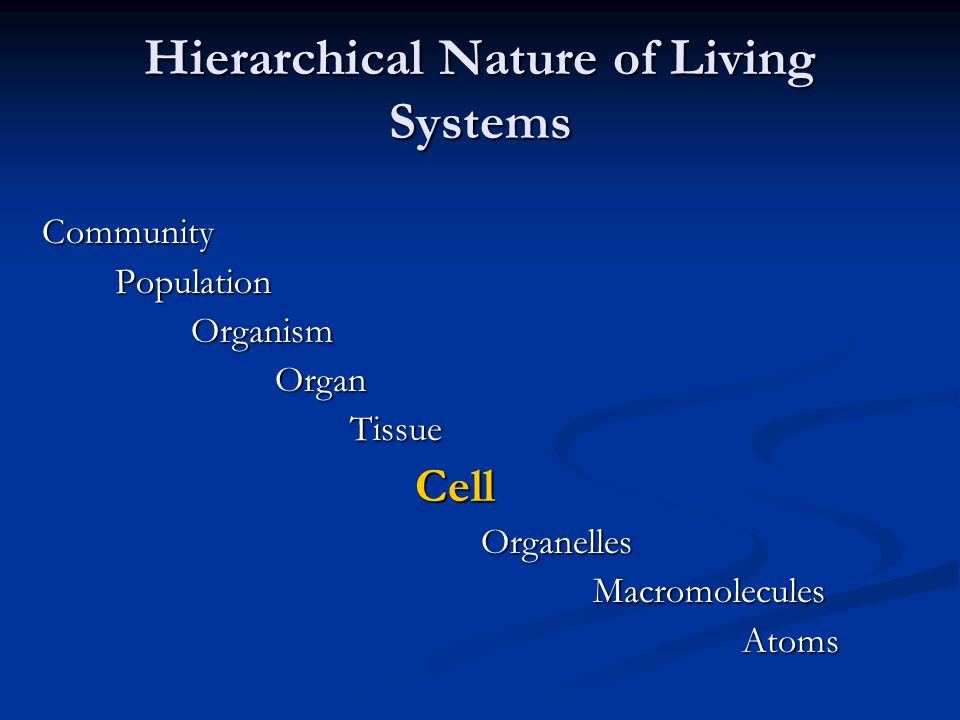 Hierarchical nature of living systems