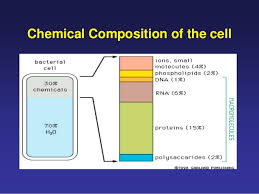 Diagram showing chemical composition of cell